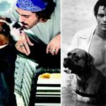 Arjun Rampal With Dogs