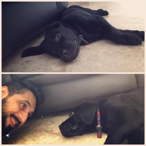 Punit Pathak loves dogs