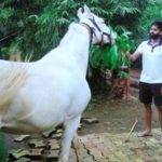 Suryakumar Yadav, an avid animal and bird lover