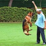 vinod-rai-pet-dog