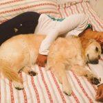 Lisa Sthalekar pet lover