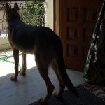Rubika Liyaquat Pet