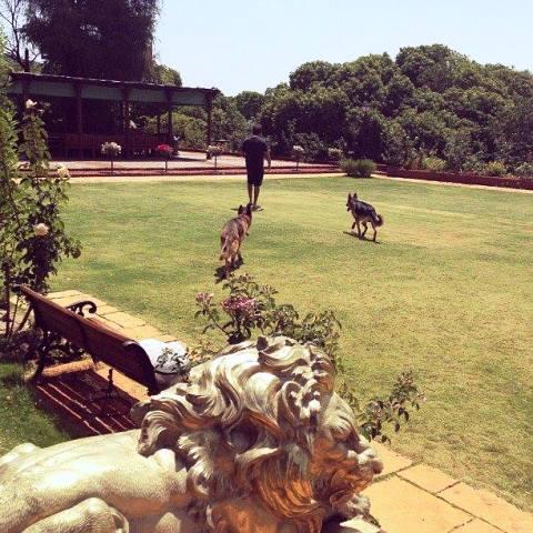 Anand Piramal, A Dog Lover