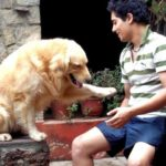 Manraj Singh loves dogs