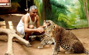 Prakash Amte with leopards at Animal Ark